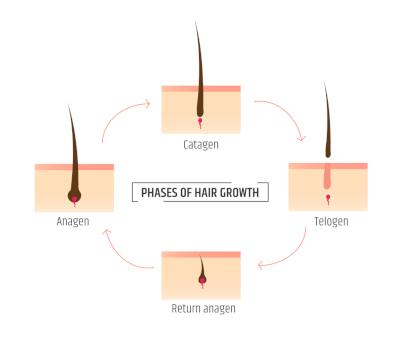 Wachstumsphasen